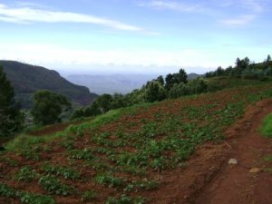 Land near Ooty, 10 kms from Ooty