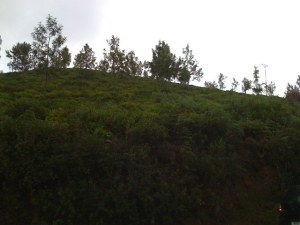Cultivation Land for Sale in Ooty