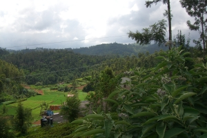 Property for Sale in Ketti, Ooty, The Nilgiris, Tamilnadu, India