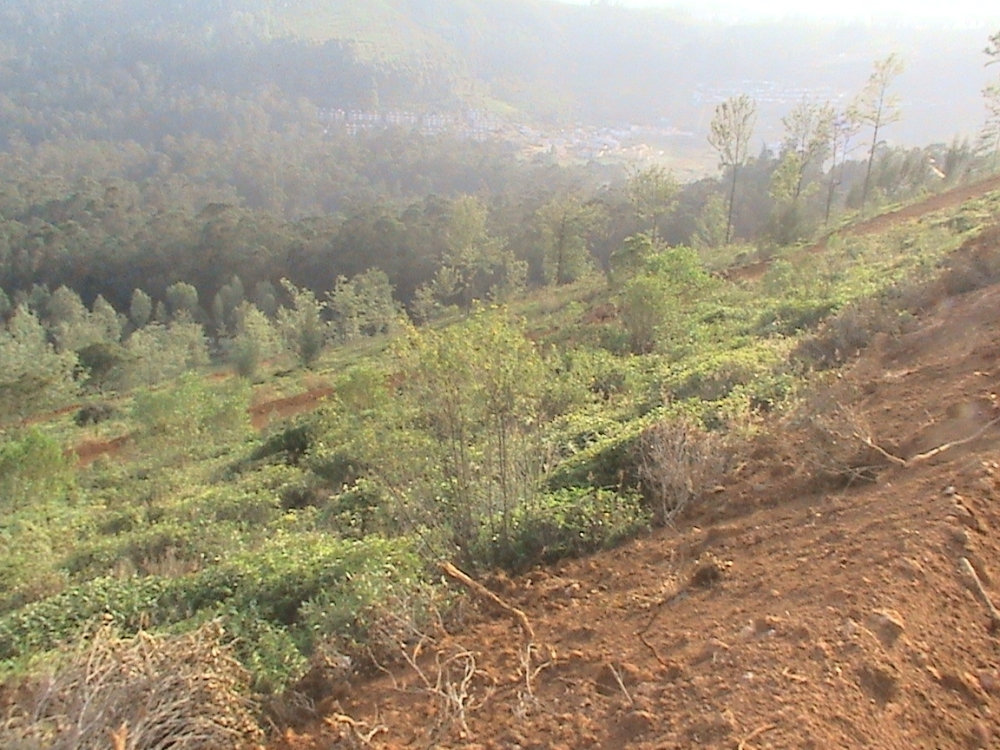 Aruvankadu Land for Sale. Ooty to Coonoor Main Road with Hill View (1/6)