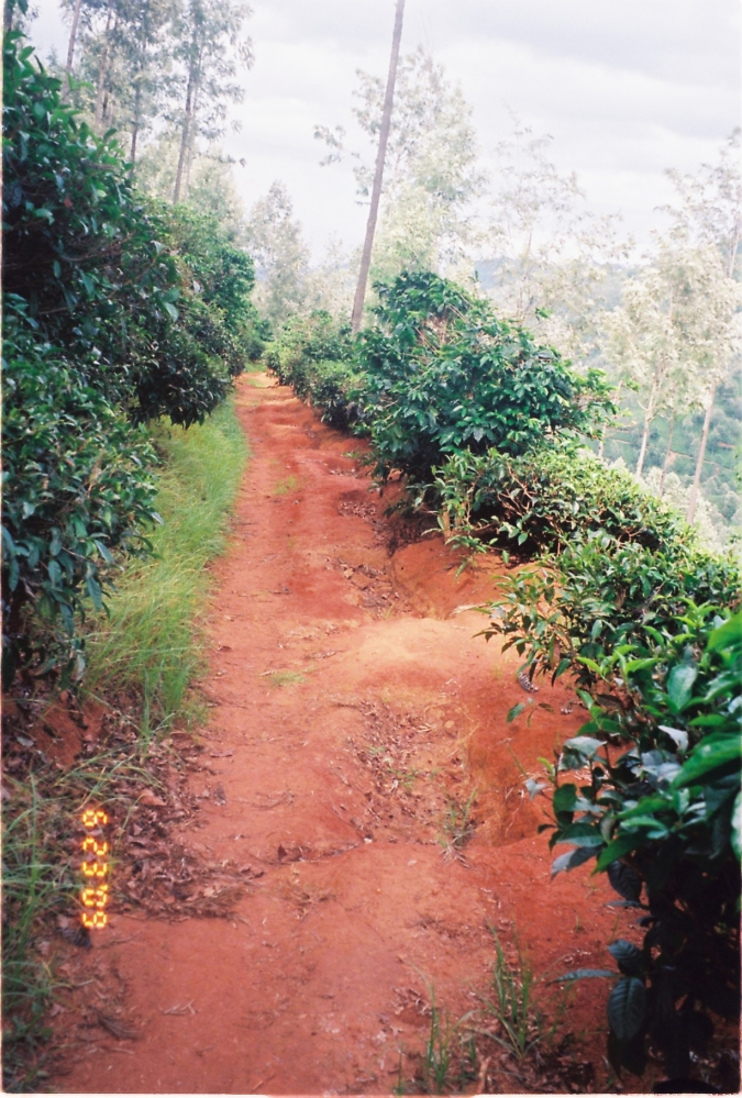 20 acres of land available near Manjoor, Ooty (2/6)
