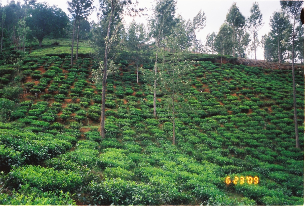 20 acres of land available near Manjoor, Ooty (3/6)