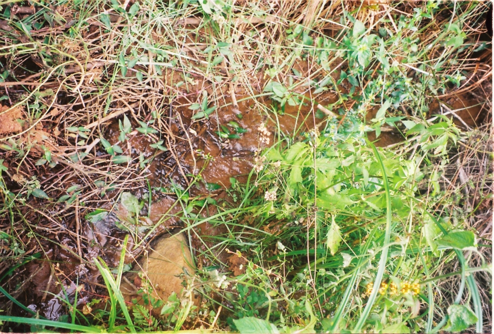 20 acres of land available near Manjoor, Ooty (1/6)