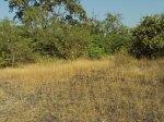 Goa land for sale